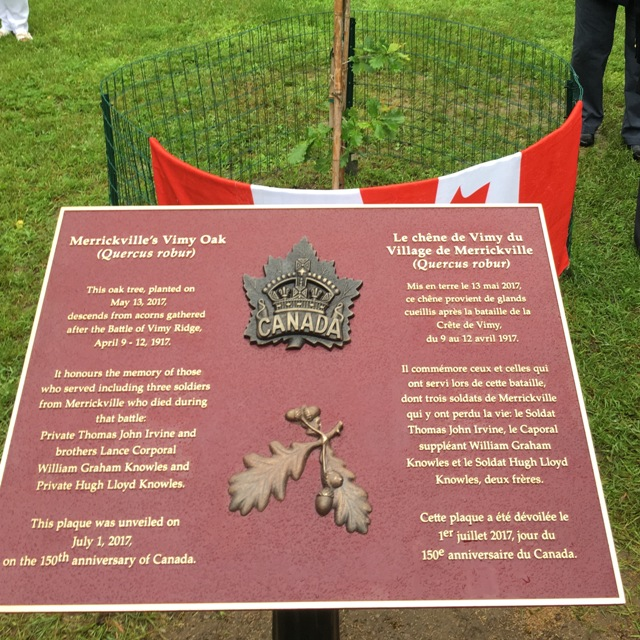 Plaque Unveiling for Vimy Oak